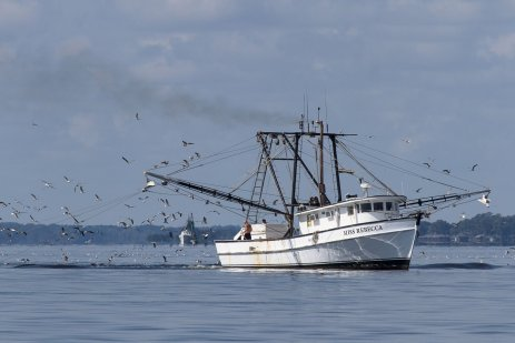 The Miss Rebecca working in the Pamlico Sound outside of Oriental, NCrole=